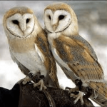 Wild Things - Owls